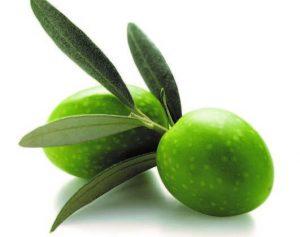proprietà foglia olivo
